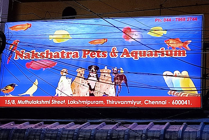 Attractive Outdoor Backlit Glow Signboard customized for Pet shop in Chennai